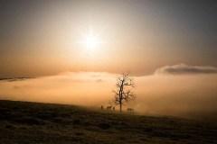Landscape, near Harrodsburg, KY. 2018 - Alyssa Schukar