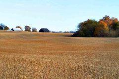Farm Landscape, near Russellville, KY.  2019 – Bob Hower