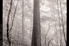 Poplar-Tree-Lilly-Cornett-WoodsLetcher-County-1977-BH