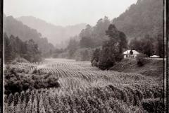 River-of-Corn-Near-Inez-Martin-County-1977-BB
